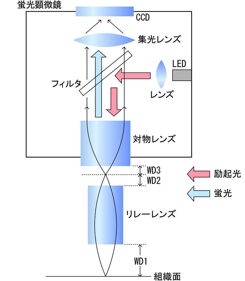 小型蛍光顕微鏡の基本構成図